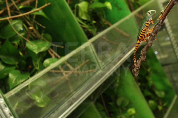 Prostory uzpůsobené pro zvířata pocházející z tropických oblastí 10