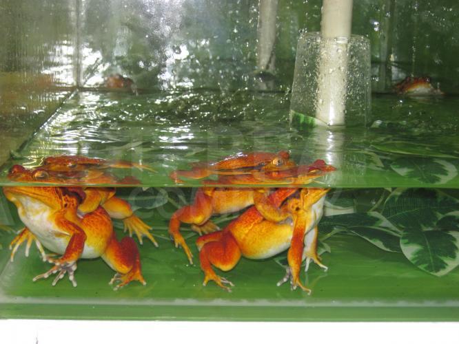 Prostory uzpůsobené pro zvířata pocházející z tropických oblastí 11