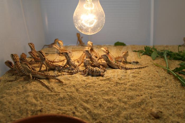 Prostory pro tropická  zvířata původně obývající velice suché oblasti typu poušť/polopoušť 3