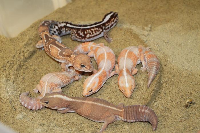 Prostory pro tropická  zvířata původně obývající velice suché oblasti typu poušť/polopoušť 5