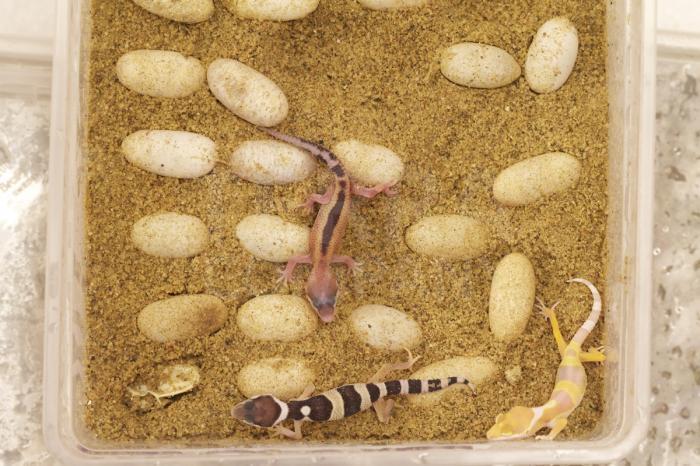 Prostory pro tropická  zvířata původně obývající velice suché oblasti typu poušť/polopoušť 6