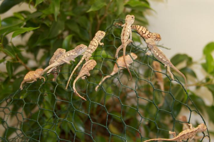 Prostory uzpůsobené pro zvířata pocházející z tropických oblastí 3
