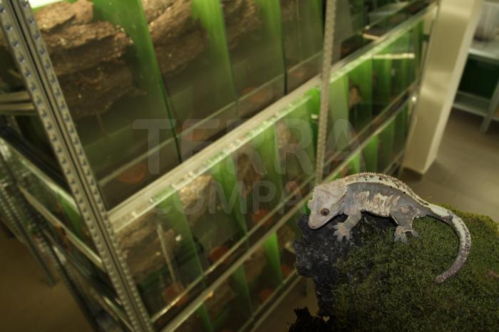 Prostory uzpůsobené pro zvířata pocházející z tropických oblastí 13